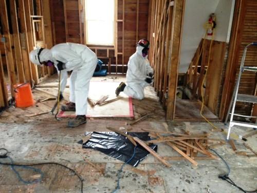 mold remediation st louis mold removal st louis